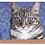 Thumbnail: Lacey Greetings Card