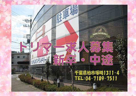 わんわん柏店舗 DCJP表紙TEL住所入り.ai 求人募集トリマー.jpg