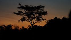 Coucher soleil en Amazonie