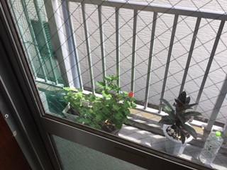 草加市 新里町 ガラス修理後の写真