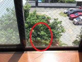 八潮市 緑町 網入り透明ガラスの修理・交換