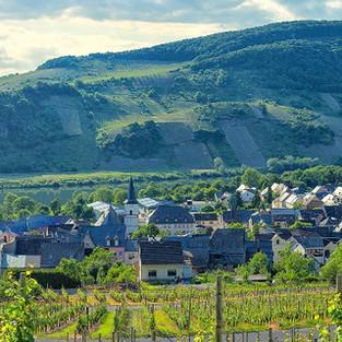 Panorama von Wintrich