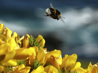 UK will back total ban on bee-harming pesticides.