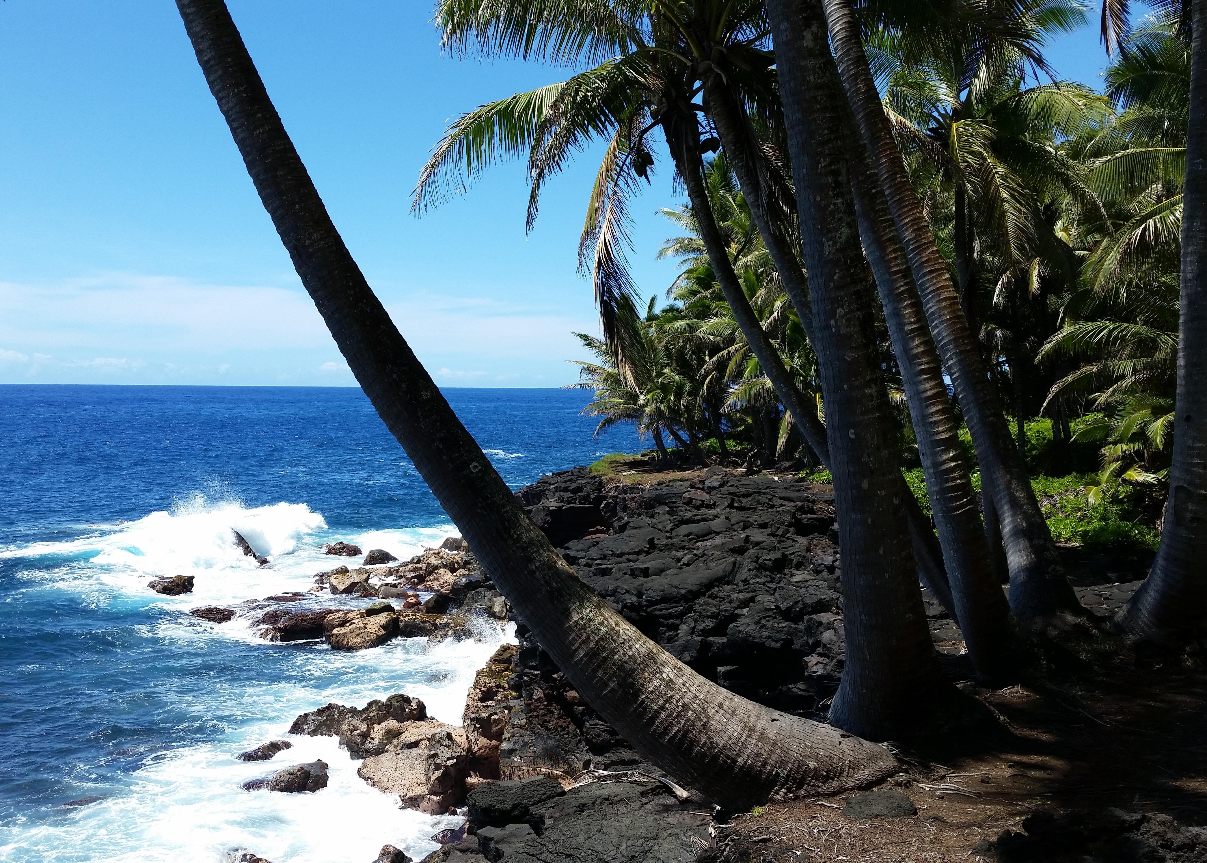 Kalapana volcano mountain retreat b&b big island hawaii