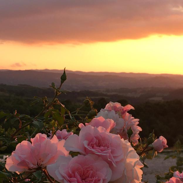 rose sunset.JPG