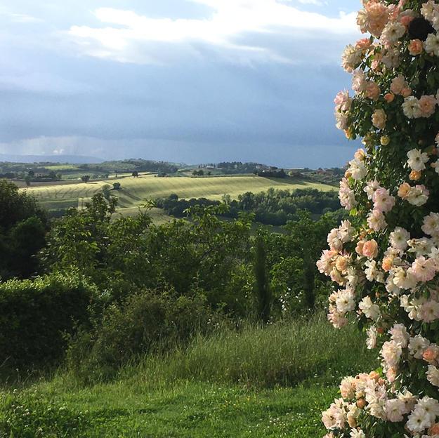 rose panorama.JPG