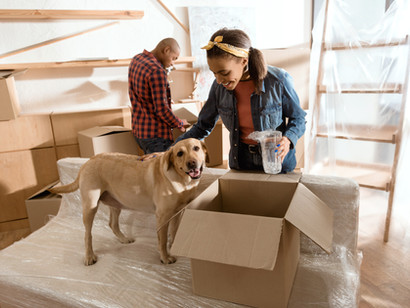 5 Ways to Make Your Dog More Comfortable When Moving