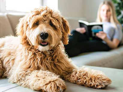 How to Sell Your Home When You Own a Dog