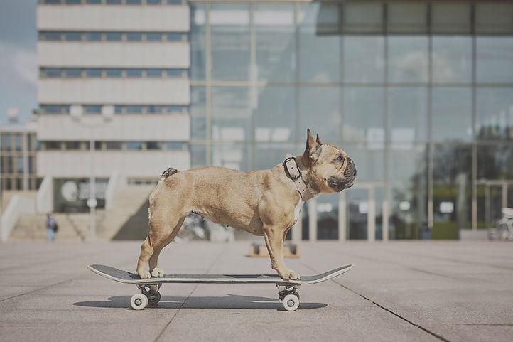laboni_skateboard.jpg