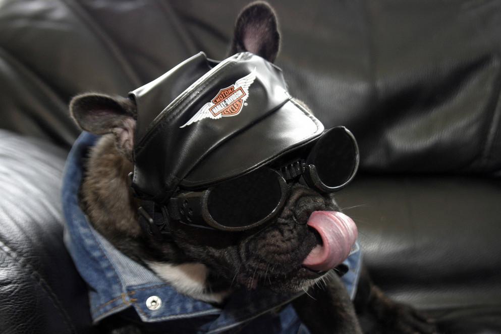 harleydog.jpg