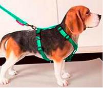 dog d'ellis wearing harness.PNG