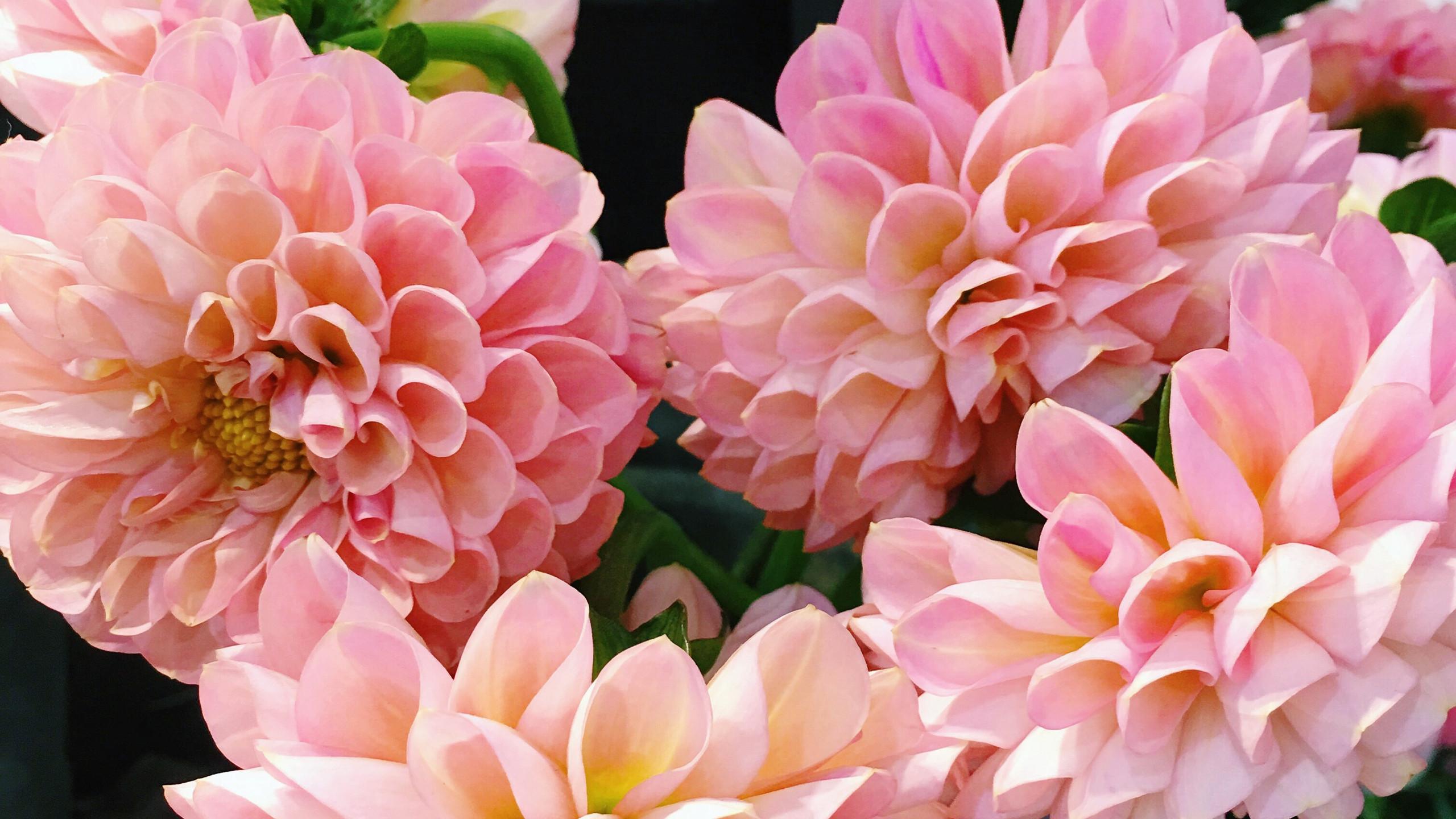 Osaka, Japan Flowers