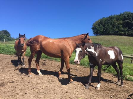 Horses in Pasture 1.JPG