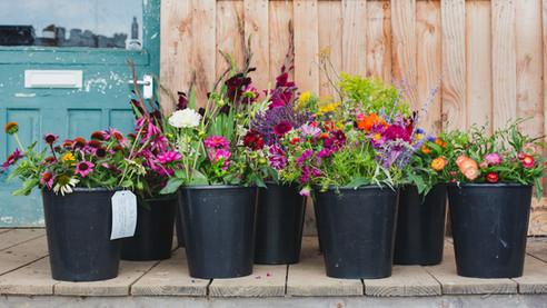 Yssys flowers-2.jpg