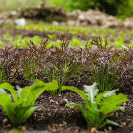 Yssys Salads-31.jpg