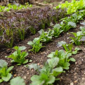 Yssys Salads-28.jpg