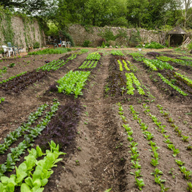 Yssys Salads-1.jpg