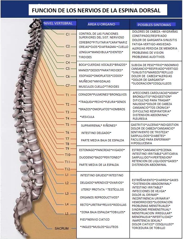 Mapa de nervios.png