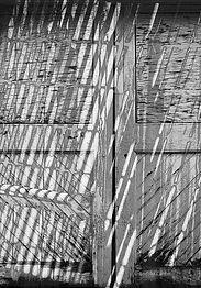 Criss-Cross (Andrea Canter).jpg