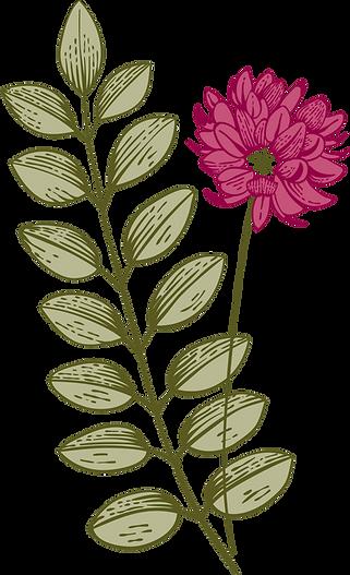 Botany%20%20%20%20%20%20%20%20%20%20%20_
