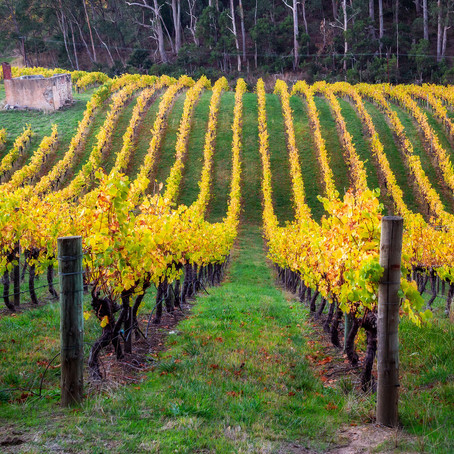 The Adelaide Hills