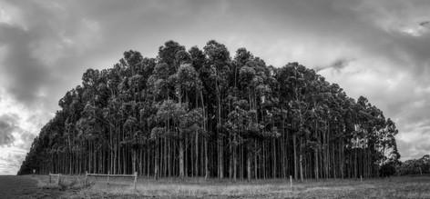 Deep Creek Forest Mono