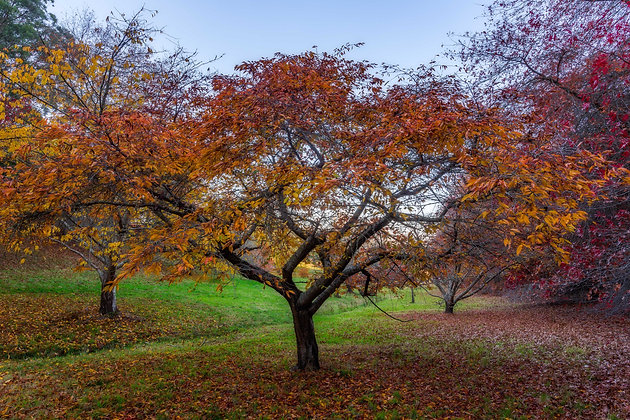 Autumn Carpets