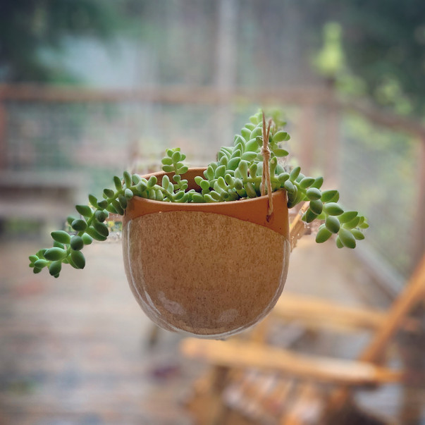 a succulent planted in a small bowl