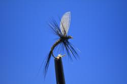 Small Black Wally Wing.JPG
