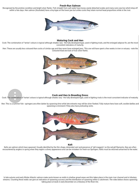 Identifying salmon at different life stages.