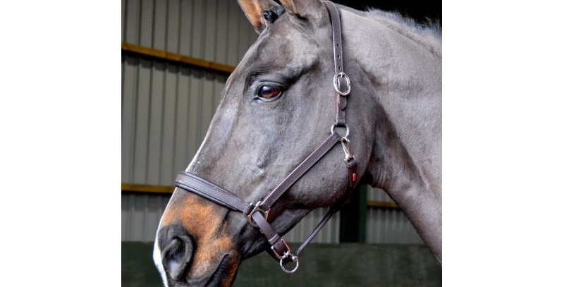 Whitaker - RTR Headcollar (ready to ride)