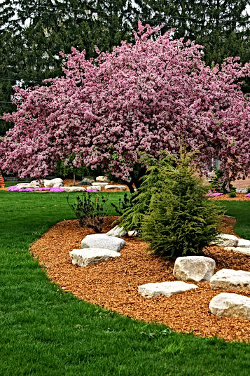 Red cedar mulch - best price in Springfield, IL - call Artisan Stone Products at 217-697-8433.