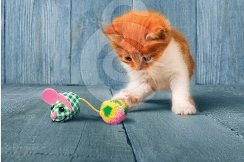 Jouet kong kitten pour chat