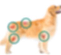 Arthrose du chien.png