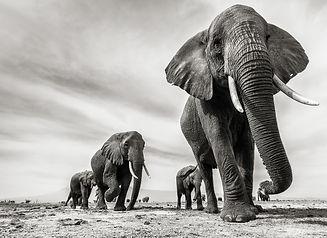 LIW_#33_ElephantParade_(SeanLeeDavies).j