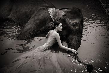 LIW_#5_ElephantDream_(SeanLeeDavies).jpg