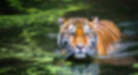Ranthambore-National-Park-Tour-Packages.
