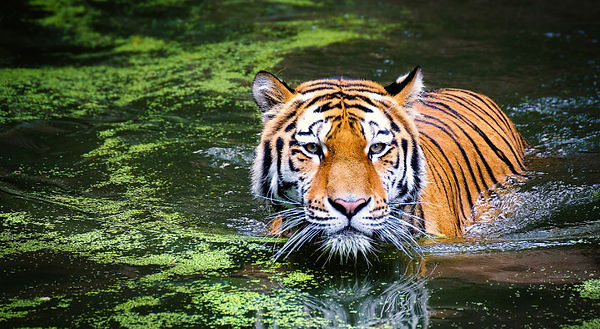 Ranthambore-National-Park-Tour-Packages.