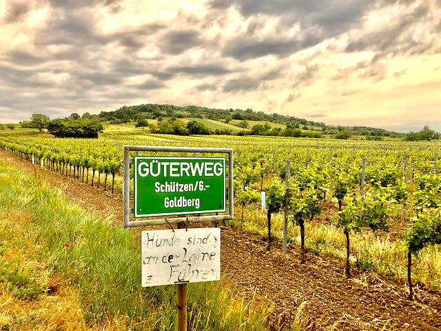 Ried Goldberg and surrounding vineyards planted with Blaufränkisch, Schützen am Gebirge.