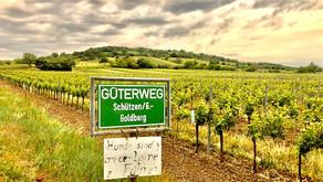 The Secrets of the Schützner Stein: Rock, Wind & Brilliant Winemaking.