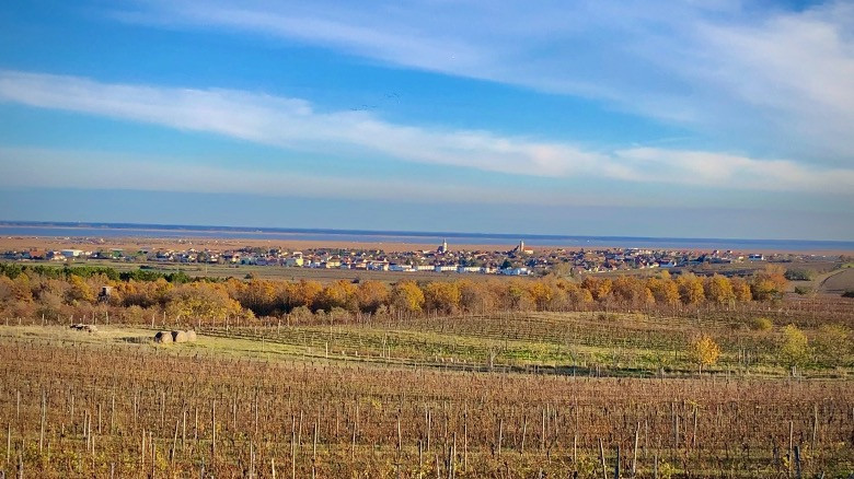 The town of Rust, Burgenland and vineyards.