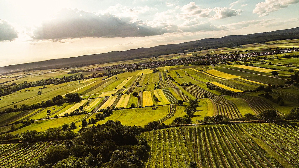 Kalk & Kreide image of vineyards descending from Ried Goldberg down to the plain towards Schützen.