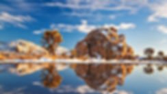 Snowy Joshua Tree.jpg