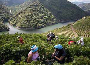 ribeira sacra wine tour