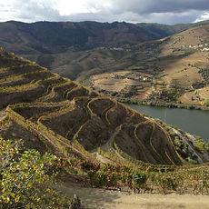 organic wine douro
