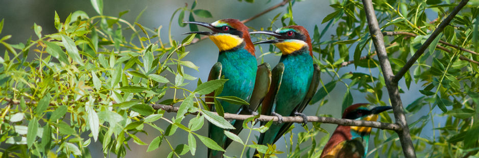 BIRDWACTHING DOURO