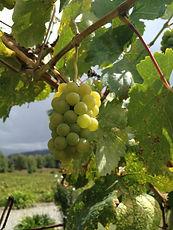 organic vinho verde wine tour