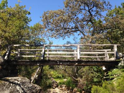 bosque portugal