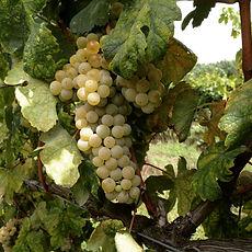 rias baixas wine tour organic