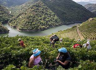 Visita a viñedos.jpg